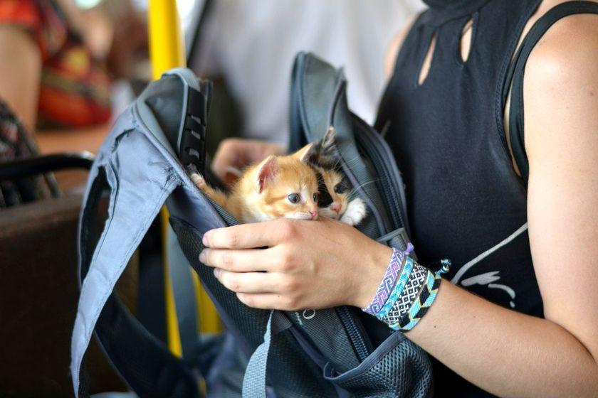 Гомельские волонтёры попробуют решить «квартирный вопрос» для бездомных животных